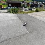 Privatparkplatz: Brieftaube Strass