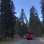 Tannenzapfen sammeln für Landesforstgarten im Spullerwald...