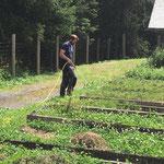 Pflanzgarten jäten und bewässern