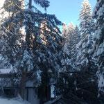 Schneebruchschäden aufarbeiten beim Kiosk und Wanderweg Waldbad Lech...