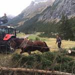 Forstarbeiten Hoher Bühl, Schonung Götzner Alpe