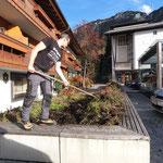 Blumen entfernen Rüfiplatz