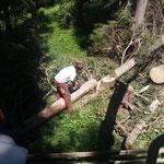 Holz richten Köpflewald