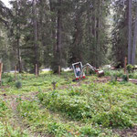 Wildschutzgatterbau Engerle Wald