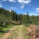 Forstarbeiten Chalberlägerwald