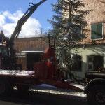 Drittleistung: Christbaum stellen Hotel Krone