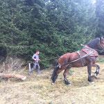 Forstarbeiten Hoher Bühl mit Pferde-Einsatz