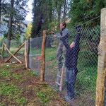 Wildschutzgatter Engerle Wald, Maschendrahtzaun montieren