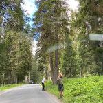 Zaun stellen Engerle Wald