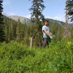 Forstarbeiten, Schutzkörbe abnehmen