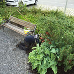 Blumenpflege Gemeindeamt Parkplatz