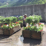 Blumen gießen mit Holder C2.42