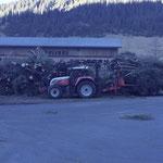 Ergebnis Forstarbeiten Hoher Bühl, Schonung Götzner Alpe