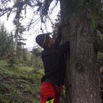 Forstarbeiten mit Winde im Zugertal