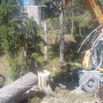 Forstarbeiten Stierloch, mit Schneider Erdbau Radbagger
