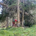 Forstarbeiten Richtung Johannestal