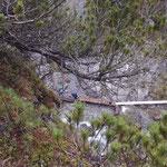 Wegebau Spullerbach Waldcamp