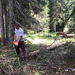 Forstarbeiten bei der Zuger Bergbahn