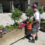 Blumenpflege beim Infopoint