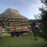 Lawinenholztransport Birchet - Omesberg