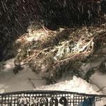 Sturmschäden beseitigen, Paana am Burgwaldweg