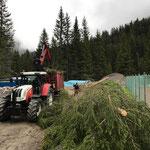 Forstarbeiten im Waldbad