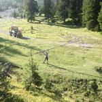 Forstarbeiten am Ameisenhügel