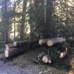 Forstarbeiten Zuger Bergbahn