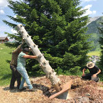 Zapfenbaum stellen, Grüner Rätsel Ring