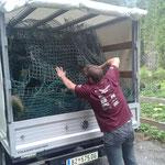 Baumschutz Gitterhüllen sammeln und entsorgen, Forst