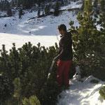 Latschen schneiden für Bestückung Eisenblumentröge Dorfzentrum