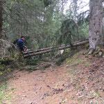 Forstarbeiten nach Föhnsturm