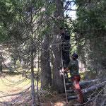 Holzarbeiten Bruggegga, anbringen der Holzwindenkette