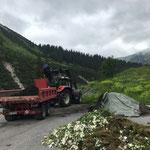 Humus laden mit Steyr 6190 CVT und Bigabhänger für Spielplatz und Christbäume Zug/Zürs
