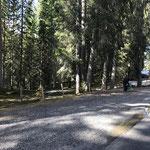 Müllzwicken Engerle Wald