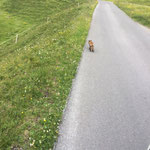 Straßenaufsicht Älpele