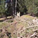 Forstaufräumarbeiten Zugertal, vorher...