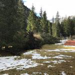 Föhnschäden im Waldbad Lech