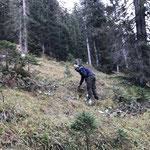 Wildschutzmanschetten höher setzen über Bauhof