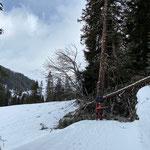 ...für Freilegung Winterwanderweg Lech-Stubenbach nach Windwurf Khurliswold