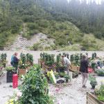 Bepflanzung des Lecher Blumenschmucks beim Heizwerk durch die Gärtnerei Falch