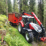 Äste holen Schöneberger Wald