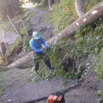 Lechweg-Instandsetzung: Baumfällarbeiten zum Brückenbau