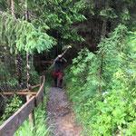 Forstarbeiten beim Waldbad