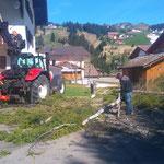 Assistenzleitung Haus Akelei - Baumentfernung