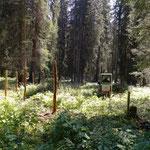 Bescheiderfüllung Engerle Wald, Wildschutzzaunsteher stellen