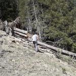 ...für Forstarbeiten beim Älpele