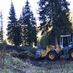 Blumenerde-Deponie Hoher Steg aufschieben, mit Heizwerk Zug-Lader