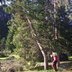 Waldbad Lech: Baumschlägerungsarbeiten