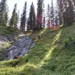 Forstarbeiten Chalberwold - Lechweg